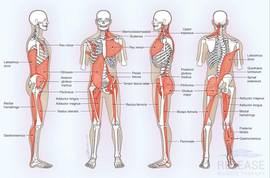 Body Pattern Analysis